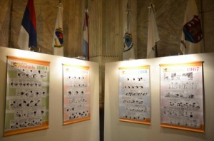 mafalda expo senado