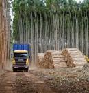 En el radicalismo propusieron medidas para fomentar la actividad foresto industrial
