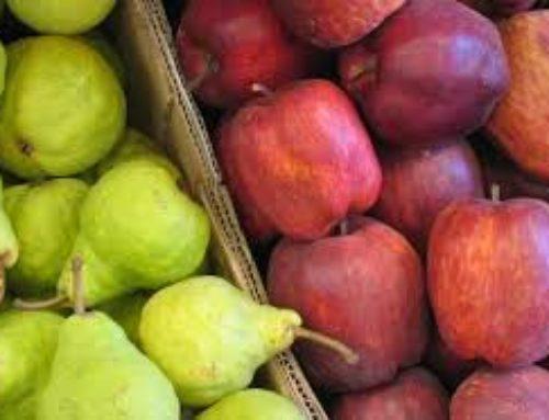 Agroindustria promueve proyecto de ley para beneficiar a sector productor de peras y manzanas