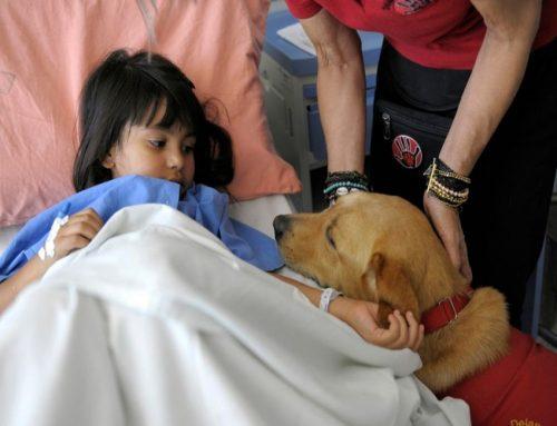 Buscan aprobar un proyecto para que los pacientes puedan recibir a sus mascotas en los hospitales