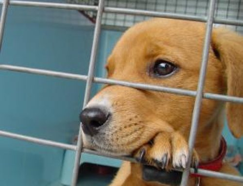 Avanzan limitaciones a la exhibición pública de animales