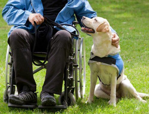 Avanza el proyecto de ley de perros de asistencia para la provincia de Buenos Aires