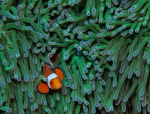 Parece que Nemo tampoco podrá salvarse del cambioclimático