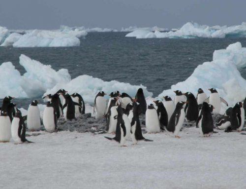 ¿Se extinguen los pingüinos de la Antártida?