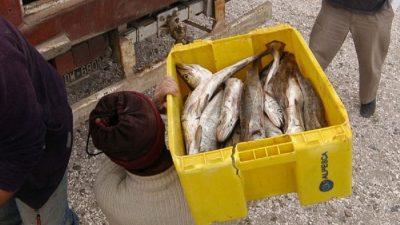 «Pescadazo» frente al Congreso. El lema: «directo del productor al consumidor»